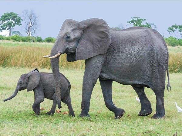 Nằm mơ thấy voi đánh con gì dễ trúng, có điềm báo gì