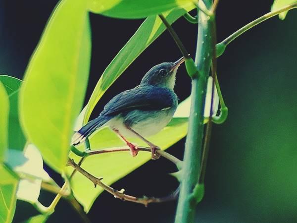 Giải mã giấc mơ thấy con chim sâu là điềm báo gì? Đánh số mấy