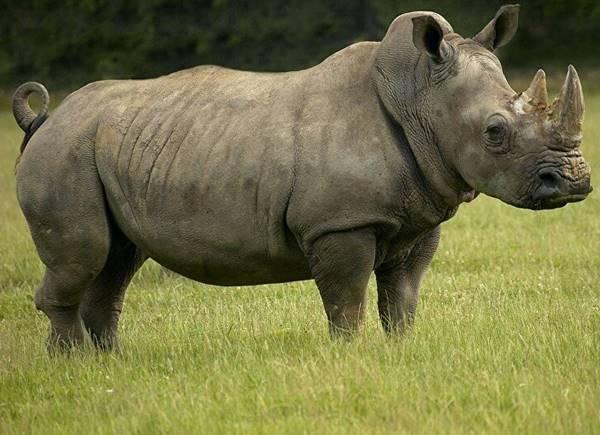 Giải mã bí ẩn giấc mơ thấy con tê giác là điềm báo gì