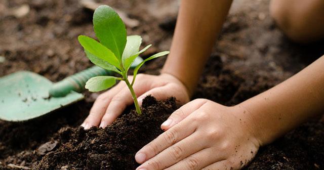 Mơ thấy trồng cây đánh số gì? Điềm báo gì?